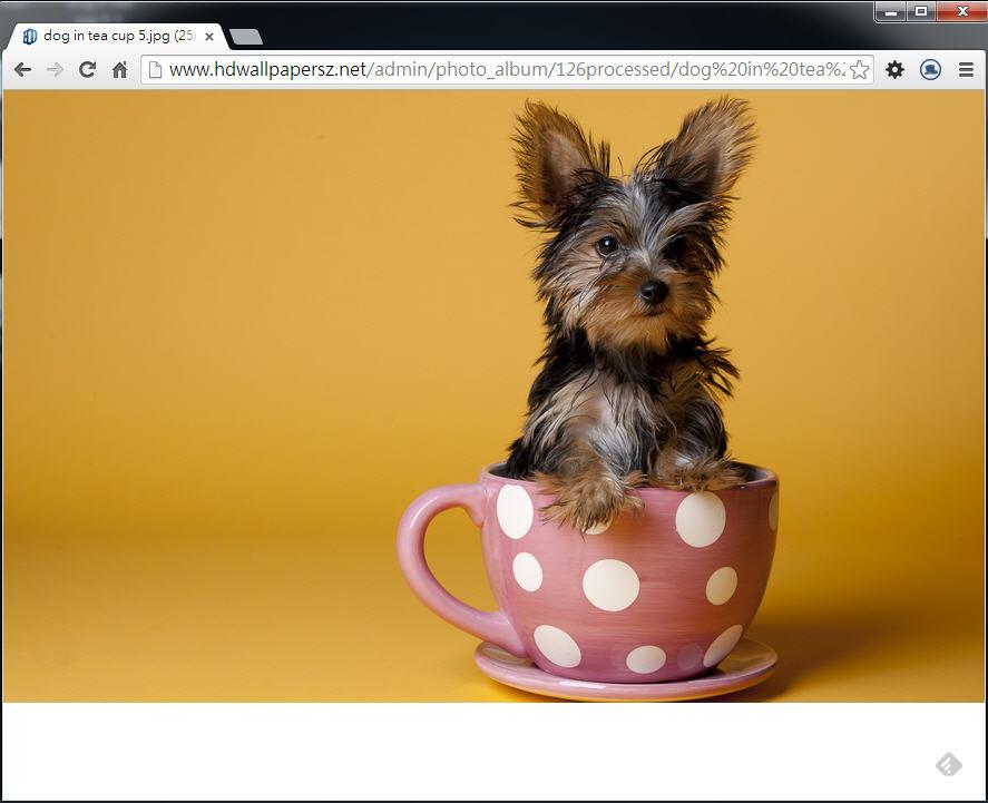 Photoshop 影像設計  - Photoshop 教學 – 色版工具 –動物毛髮去背 - fly-001