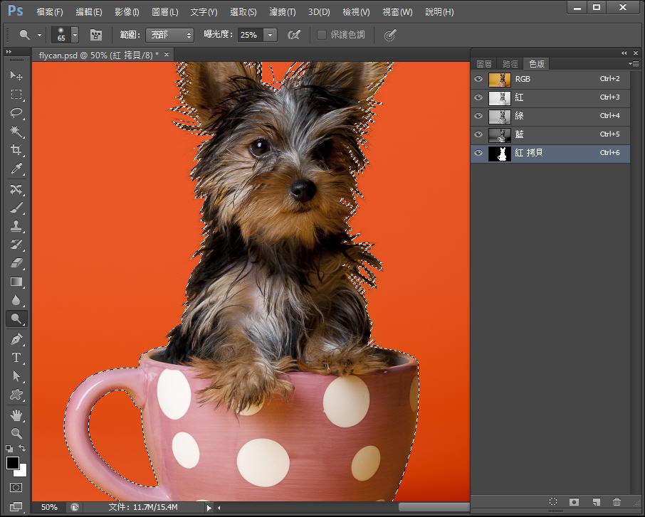 Photoshop 影像設計  - Photoshop 教學 – 色版工具 –動物毛髮去背 - fly-251