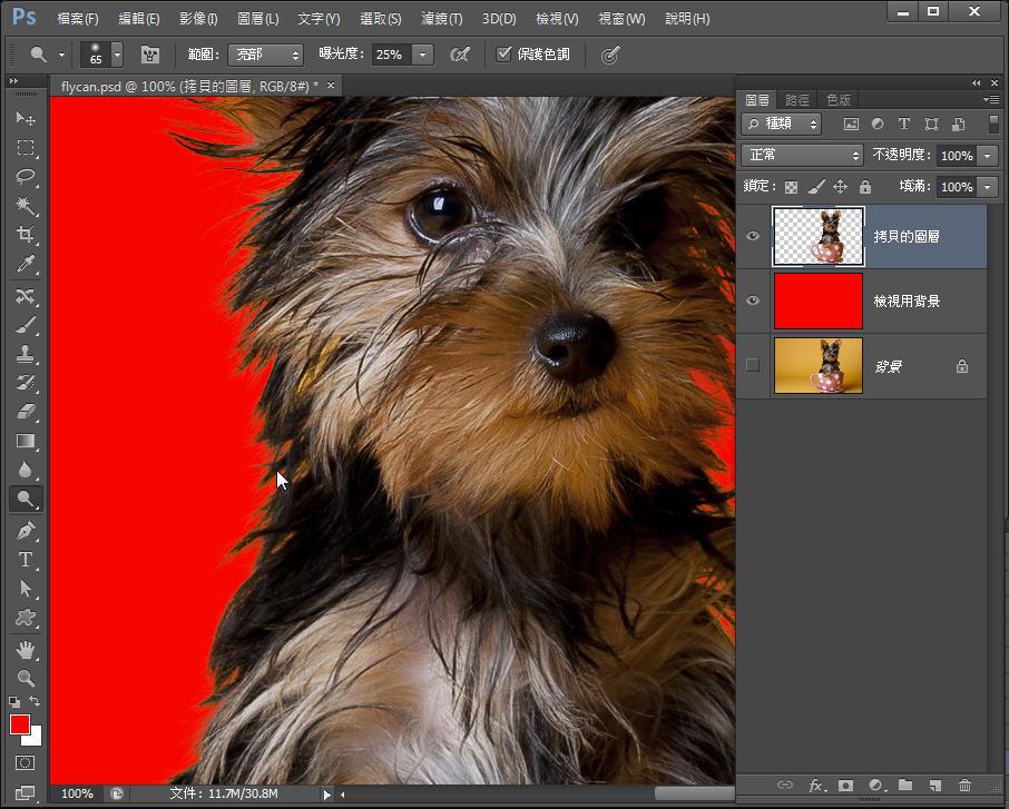 Photoshop 影像設計  - Photoshop 教學 – 色版工具 –動物毛髮去背 - fly-301